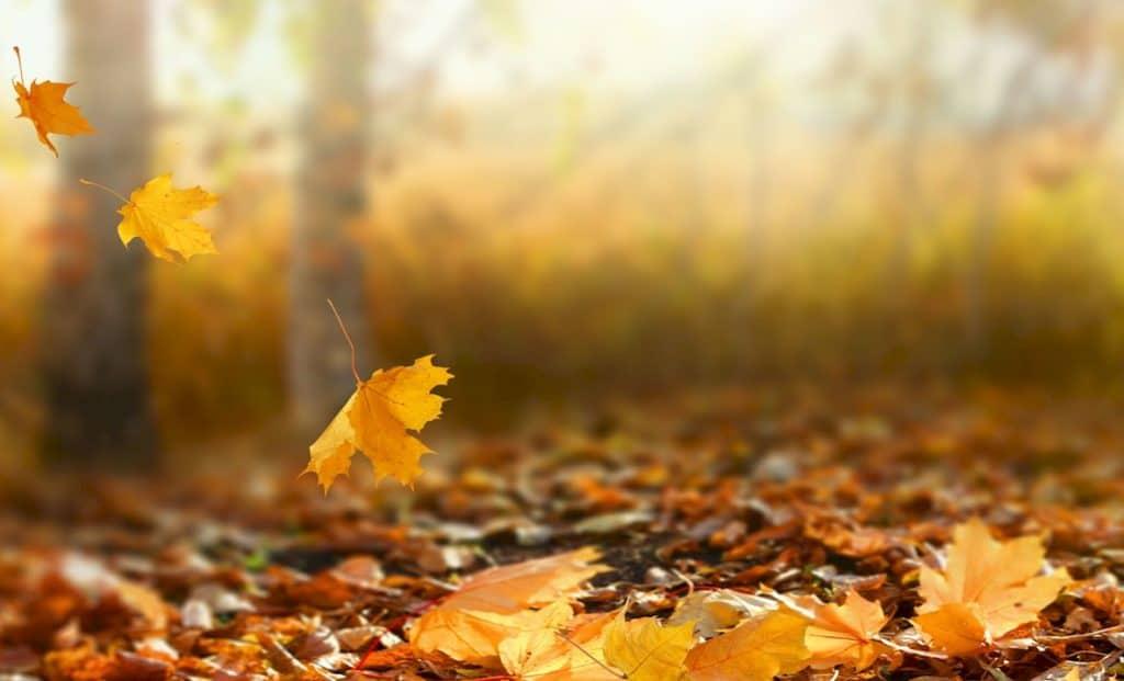 Autumn Finance